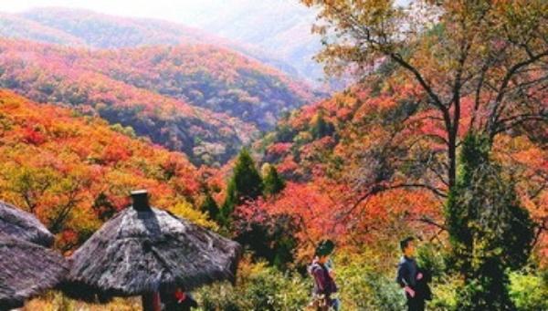 陕西省延安市甘泉县境内的劳山国家森林公园总面积52万亩,主沟纵深达