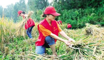 帮助老弱农户抢收稻谷(中国经济日报)