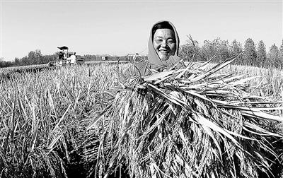 江苏省连云港市赣榆县金山镇西张夏村农民在展示丰收的水稻.