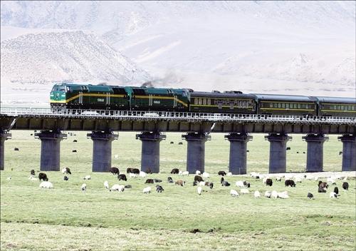 为保护野生动物,青藏铁路留了很多特殊野生动物迁徙