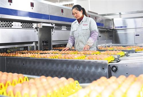 12月2日,江苏省海安市大公镇南通壹号食品公司员工在包装出口鸡蛋.